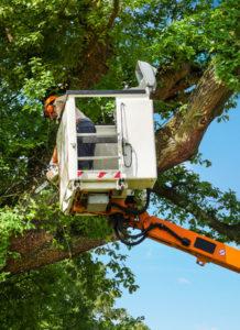 Baumpflege / Baumschnitt auf Hebebühne mit Steiger in Hamburg